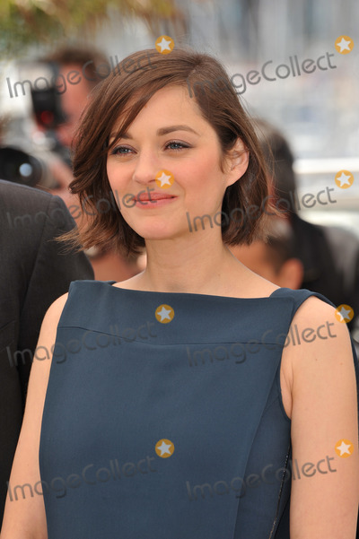 TI Photo - Marion Cotillard at the photocall for her movie Blood Ties at the 66th Festival de CannesMay 20 2013  Cannes FrancePicture Paul Smith  Featureflash