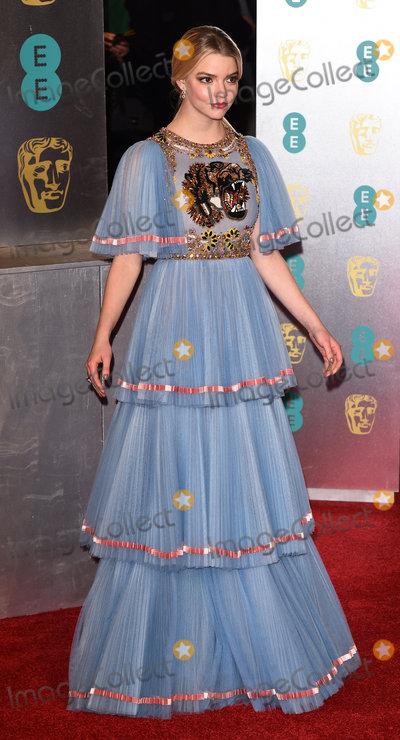 Anya Taylor-Joy Photo - London UK Anya Taylor-Joy at the EE British Acadamy Film Awards (BAFTAs) at The Royal Albert Hall on Sunday 12 February 2017 Ref LMK392 -61671-130217Vivienne VincentLandmark Media WWWLMKMEDIACOM
