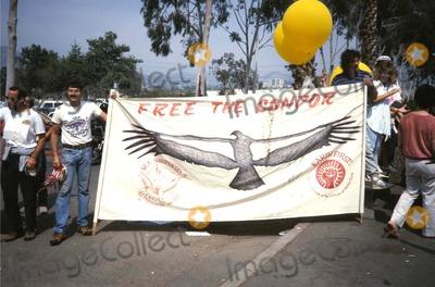 Angel City Photo - Rally to Free the Condor at Los Angeles City Zoo S139299 Photo by Bob V Noble-Globe Photos