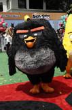 Angry Bird Photo 5