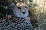 CHEETAH CUB Photo 5