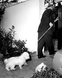 Photo - Archival Pictures - Globe Photos - 71962